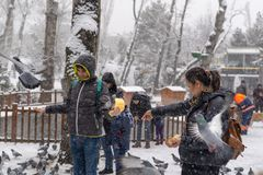 Ankara/Turkey-December 06 2018: People feeding pigeons on their hands royalty free stock photography