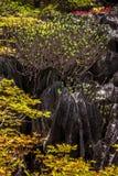 ankarana Μαδαγασκάρη tsingy Στοκ φωτογραφίες με δικαίωμα ελεύθερης χρήσης