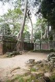 Ankor Wat, Камбоджа Стоковое Изображение RF