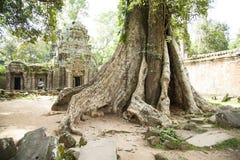 Ankor Wat, Kambodża Zdjęcia Stock