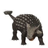 Ankylosaurus 01. Ankylosaurus was an armored dinosaur from the Creataceous Period of Earths history. Its fossils have been discovered in western North America Royalty Free Stock Images