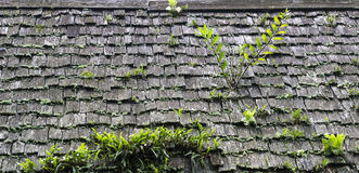 Anlage auf altem Dach Stockbilder