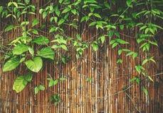 Anlage auf Bambus Lizenzfreie Stockfotos