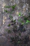 Anlage auf dem Hintergrund der alten Wand Lizenzfreies Stockbild