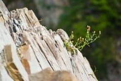 Anlage auf Felsen stockbild