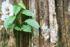 Anlage auf großer Baumrinde Lizenzfreies Stockfoto