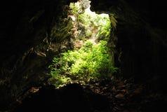 Anlage in der Höhle Lizenzfreie Stockbilder