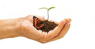 Anlage in der Hand mit Schmetterling lizenzfreies stockbild