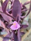 Anlage des purpurroten Herzens mit Blumen stockbilder