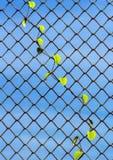 Anlage, die auf Maschendrahtzaun wächst Lizenzfreie Stockfotografie