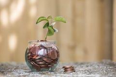 Anlage, die in den Einsparungens-Münzen wächst Stockfoto