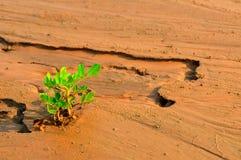 Anlage, die in einem Wüstensand wächst Stockfotos