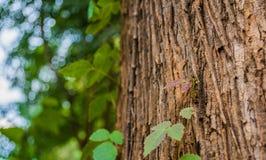 Anlage, die oben einen Baumstamm klettert Lizenzfreies Stockfoto