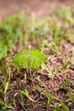 Anlage, die vom Boden mit grünem Gras wächst Stockbild