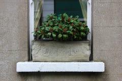 Anlage in einem aufwändigen Kasten im Fenster Lizenzfreie Stockfotos