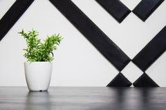Anlage in einem Blumentopf auf dem Tisch Stockfotos
