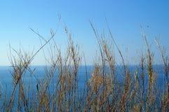 Anlage gegen blauen Himmel und Meer Stockfotografie