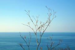 Anlage gegen blauen Himmel und Meer Lizenzfreie Stockfotos