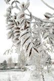 Anlage im Frost Stockfotografie