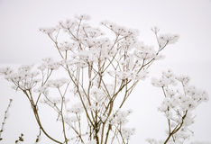 Anlage im Schnee stockfoto