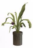 Anlage im Vase auf getrenntem Hintergrund Stockbilder