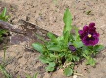 Anlage, Landwirtschaft, Natur, Garten, Boden, Grün, pflanzend und arbeiten, Sämling, Wachstum, Blatt, Frühling, Hand, Schmutz, Sp stockbild