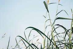 Anlage mit grünem Blatt im blauen Himmel stockfotografie
