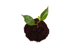 Anlage mit grünen Blättern und Land lizenzfreie stockfotografie