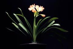 Anlage mit orange Blume Lizenzfreies Stockbild