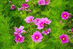 Anlage mit rosa Blüten Stockfotos