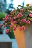 Anlage mit rosafarbenen Blumen Lizenzfreies Stockfoto