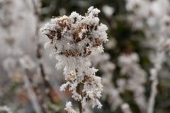 Anlage mit Winterdekorationen Stockfotografie