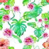 Anlage und Blumen Monstera Lizenzfreies Stockfoto