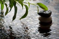 Anlage und Kiesel mit waterdrop und Kräuselungen lizenzfreie stockfotos