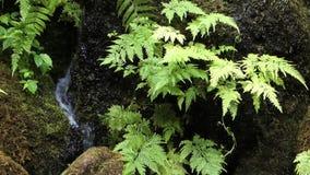 Anlage und Wasserfall stock video footage