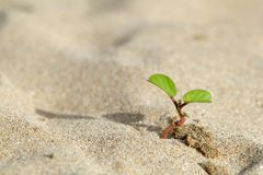 Anlage wachsen im Sand Stockfotografie