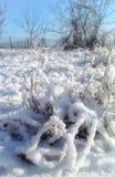 Anlagen abgedeckt mit Schnee Stockbilder