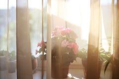Anlagen auf den Fensterbrettsonnenunterganginnenhauptblumen für Speichergeschäft lizenzfreies stockbild