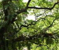 Anlagen auf Zweigen Lizenzfreies Stockbild