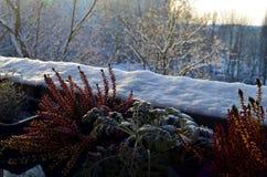 Anlagen bedeckt mit Schnee im Winter Lizenzfreie Stockfotografie