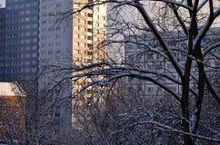 Anlagen bedeckt mit Schnee im Winter Lizenzfreie Stockbilder