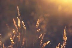 Anlagen bei Sonnenuntergang mit Rücklicht Lizenzfreie Stockfotografie