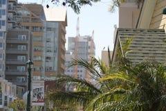 Anlagen blüht im Stadtzentrum gelegenes San Diego Lizenzfreie Stockfotografie