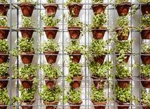 Anlagen in den Blumentöpfen Stockbild
