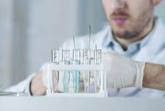 Anlagen in den Reagenzgläsern mit verschiedenen Flüssigkeiten Lizenzfreies Stockbild