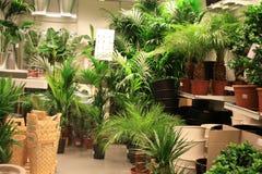 Anlagen in der Gartenmitte Lizenzfreie Stockbilder
