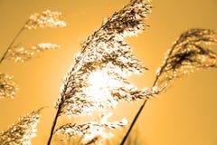 Anlagen in der Sonne Stockbilder