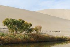 Anlagen in der Wüste Stockfotos