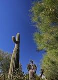 Anlagen in der Wüste Stockfoto