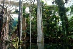 Anlagen des tropischen amazonischen Waldes, gewachsen in einem Gewächshaus lizenzfreie stockbilder